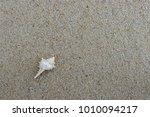 fossil shell on the sand beach  ... | Shutterstock . vector #1010094217