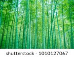 bamboo and bamboo forest   Shutterstock . vector #1010127067