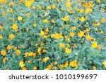 yellow flower background | Shutterstock . vector #1010199697