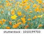 yellow flower background | Shutterstock . vector #1010199703
