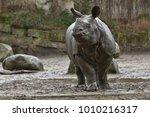 indian rhinoceros in the... | Shutterstock . vector #1010216317