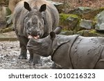 indian rhinoceros mother and a... | Shutterstock . vector #1010216323