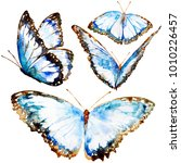 beautiful blue butterflies ... | Shutterstock . vector #1010226457
