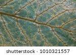 leaf closeup background. macro... | Shutterstock . vector #1010321557