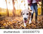Stock photo senior woman with dog on a walk in an autumn forest 1010330773