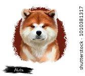 akita breed digital art... | Shutterstock . vector #1010381317
