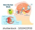 how eye work medical... | Shutterstock .eps vector #1010422933