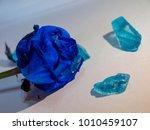 blue roses  tenderness  stones | Shutterstock . vector #1010459107