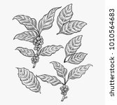 hand drawn coffee leaf vector   Shutterstock .eps vector #1010564683