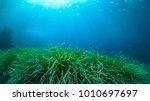 underwater green grass blue... | Shutterstock . vector #1010697697