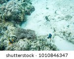 sea life abstract with tropical ... | Shutterstock . vector #1010846347