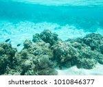 clown fish  surgeonfish  domino ... | Shutterstock . vector #1010846377