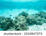 clown fish  surgeonfish  domino ... | Shutterstock . vector #1010847373