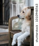 young cute lovely mixed breed... | Shutterstock . vector #1010948563