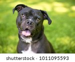 portrait of a mixed breed...   Shutterstock . vector #1011095593