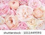 summer blossoming delicate... | Shutterstock . vector #1011449593