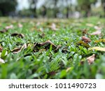 the green grass portrait | Shutterstock . vector #1011490723