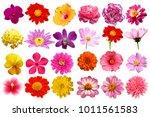 single flowers isolated... | Shutterstock . vector #1011561583