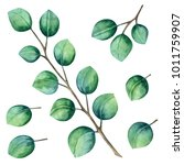 Watercolor Eucalyptus. Leaves ...