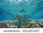 underwater life a school of... | Shutterstock . vector #1011811357