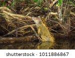 bright colored male green... | Shutterstock . vector #1011886867