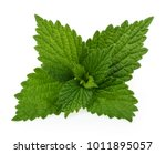 Nettle Isolated On White...