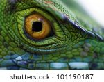 Eye Of Green Basilisk ...