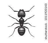 black ant insect illustration | Shutterstock .eps vector #1011920143