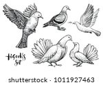 Doves Hand Drawn Illustration....