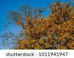 cotswolds midlands england uk | Shutterstock . vector #1011941947