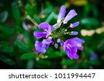Small photo of Antidesma acidum flower in garden