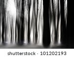 Spooky Woods In Black And Whit...