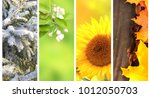 four seasons of year.... | Shutterstock . vector #1012050703