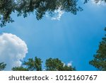 treetop  canopy  crown of the... | Shutterstock . vector #1012160767
