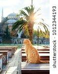 turkey.istanbuli   november 11  ...   Shutterstock . vector #1012344193