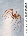Small photo of Giant House Spider under water with air bubbles keeping it afloat