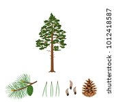 tree pine  branch  pine cone ... | Shutterstock .eps vector #1012418587