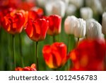 amazing nature concept of red... | Shutterstock . vector #1012456783