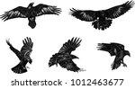 Set Of Black Ravens. Hand Draw...