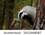 wildlife scene with european... | Shutterstock . vector #1012468087