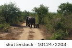 elephants marching throught the ... | Shutterstock . vector #1012472203