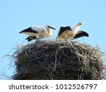 close up of stork nest with...   Shutterstock . vector #1012526797