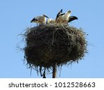 stork nest with young storks...   Shutterstock . vector #1012528663