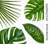 creative tropical fresh palm... | Shutterstock . vector #1012546093