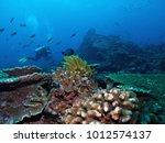 coral reef underwater | Shutterstock . vector #1012574137