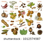 herbs set  condiments and... | Shutterstock .eps vector #1012574587
