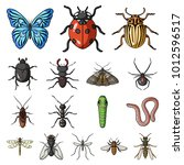 different kinds of insects... | Shutterstock . vector #1012596517