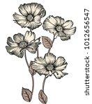 vector illustration of flowers | Shutterstock .eps vector #1012656547