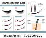 eyelash extension guide. tips... | Shutterstock .eps vector #1012680103