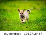 little puppy is running happily ... | Shutterstock . vector #1012718467